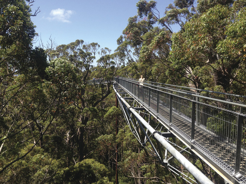 Tree Top Walk Walpole Nornalup National Park