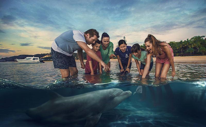 Wild Dolphin Feeding at Tangalooma Island Resort, Moreton Island