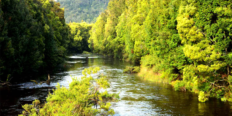 Savage River Regional Reserve
