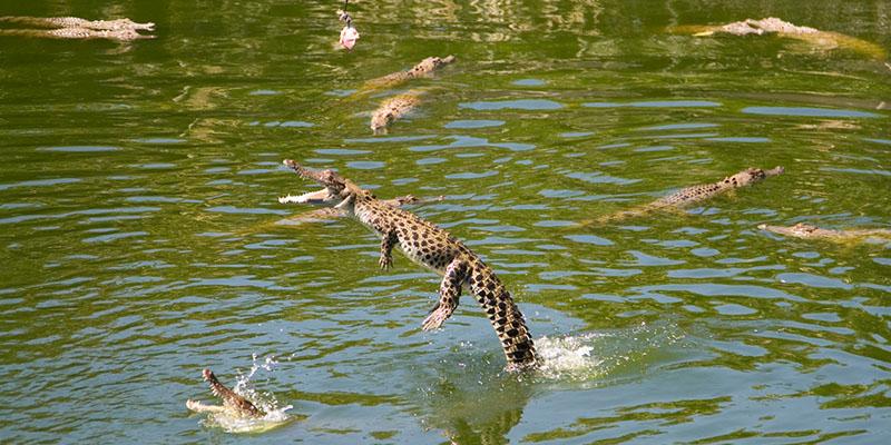 Crocodile from Crocodylus park in Darwin